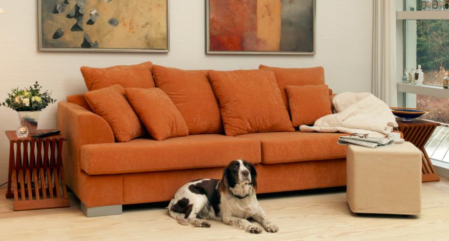 Ar nauja sofa patiks jūsų augintiniui ?